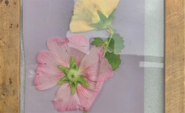 Blomma, lumenprint. Foto