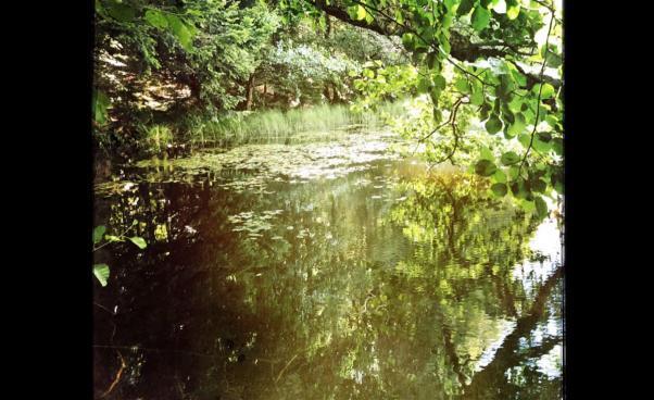 Natur, vatten, träd. Foto