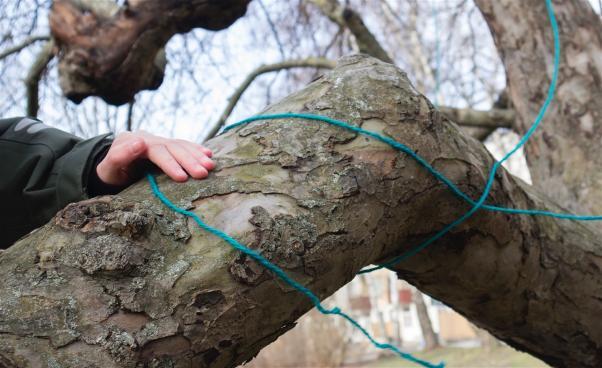 Hand på trädstam. Foto
